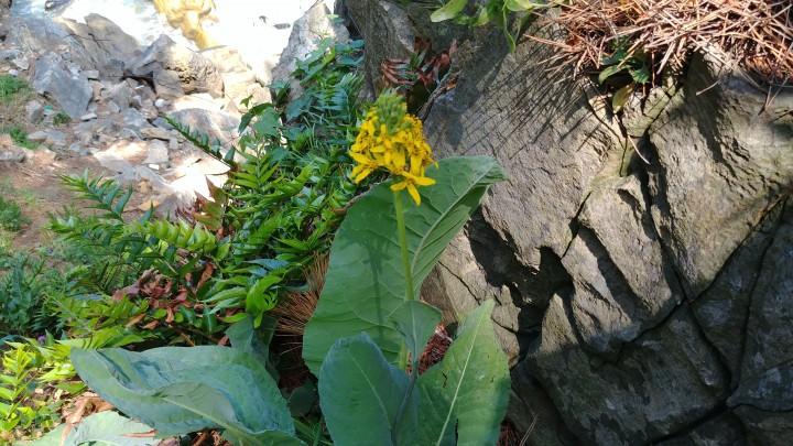 b4aa1904a2b51aeb1fdd27af3477ceae_1560760